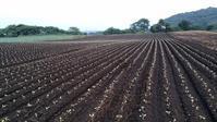 梅雨明け、定植期の終わり - 農業青年のブログ