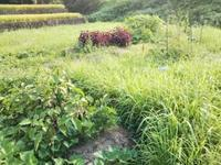 放置されても野菜は生きていた♪・・・南国畑 - 化学物質過敏症・風のたより2