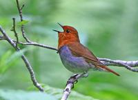 思いかけず・・・。 - 季節の野鳥~Wildbirds archives