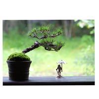 盆栽 - カエルのバヴァルダージュな時間