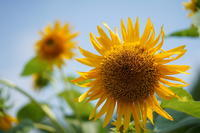 「夏の花たち-京都府立植物園-」 - ほぼ京都人の密やかな眺め