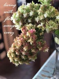 #お盆中は休まず営業 -  Flower and cafe 花空間 ivory (アイボリー)
