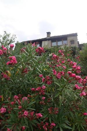 7、8月の庭 2  - Pietra Sole         --- la casa d'arte sul granito