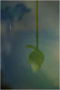 花の命は短くて - HIGEMASA's Moody Photo