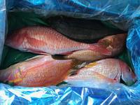 高級魚キジハタを1尾食す - やせっぽちソプラノのキッチン2