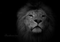 ライオン - 動物園の住人たち写真展(はなけもの写眞店)