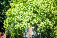 Nature must not win the game‥ - Triangle NY