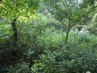 庭が、それなりに華やか8月4日(日) - 雲居