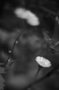 flower(3cut) -     ~風に乗って~    Present