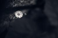 flowers(3cut) -     ~風に乗って~    Present