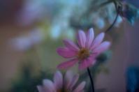 flowers(4cut) -     ~風に乗って~    Present