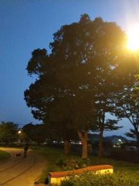 夜散歩と いつもの検査。 - 空を見上げて