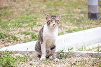 ご近所猫 2019.08.04 - Rayblade Photos