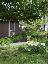 アジサイアナベルの南庭と外観 - atelier kukka architects