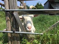 「メイの思い190805」 - 自然卵農家の農村ブログ 「歩荷の暮らし」
