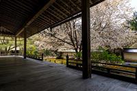 桜咲く京都2019常照皇寺の春 - 花景色-K.W.C. PhotoBlog