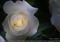 書かないからって悲しくないわけじゃ、ない。 - 東京女子フォトレッスンサロン『ラ・フォト自由が丘』〜恋フォトからはじめるさいとうおりのテーブルフォトレッスン〜