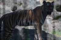 シズカさま - 動物園へ行こう