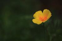 1623 花壇に咲く一輪 - 四季彩空間遠野