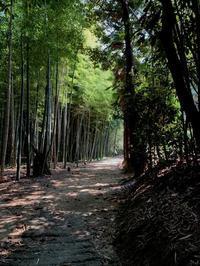 帰郷 - 木洩れ日の森から