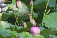 ハスゴイ(2) - 奥武蔵の自然