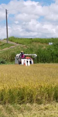 稲刈り2019 - 山脇農園ブログ