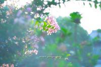 夏の朝。 - Yuruyuru Photograph