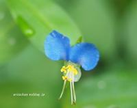 我が家の真夏のお花@令和元年 - アリスのトリップ2