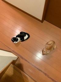 今日の猫たち - かぎしっぽ。