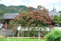 当麻寺周辺の散策 - 峰さんの山あるき