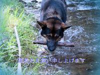 暑中お見舞い - Photo Album