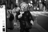A White Bear Walking In A Muggy Night - SILENT SOLILOQUY