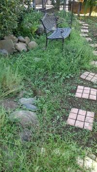台風前の草取り - うちの庭の備忘録 green's garden