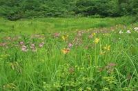 天然のお花畑は、サイコーです♪ - みい写日記☆
