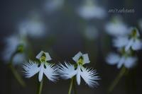 広島平和記念日に・・。 - MIRU'S PHOTO