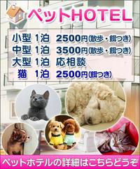 宮城松島近郊のペットホテル/犬猫3000円~ - 宮城・仙台ペットショップ鈴花