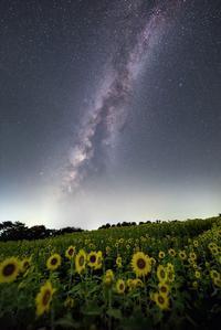 向日葵畑と夏夜空 - Qualia