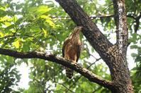 この森はサウナ状態で命の危険である! - Weblog : ちー3歩 Ⅱ
