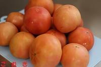 トマト大量消費 - パン・お菓子教室 「こ む ぎ」