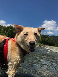 のんちゃん川へ行く - Kokiary@ のどかへつなぐ happy days