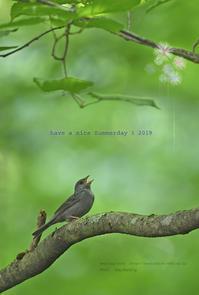 暑中見舞い申し上げます - healing-bird