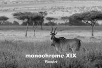 monochrome XIX「FineArt」2週目の3日目、今日も猛暑の中を開館から閉館まで多くの方々にご来館頂きました、ありがとうございます。 - 写真家 永嶋勝美の「散歩の途中で . . . !」