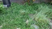 草取り続き - うちの庭の備忘録 green's garden