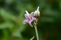 ウトナイ湖の花~今週のウトナイ湖 - やぁやぁ。