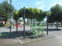 夏の藤棚 - 台町公園ブログ