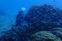 19.8.8台風の足音を聞きながら - 沖縄本島 島んちゅガイドの『ダイビング日誌』
