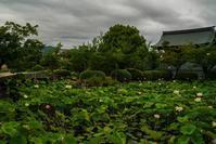 天龍寺の蓮 - 鏡花水月
