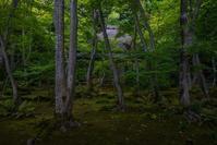 祇王寺~緑美しい頃 - 鏡花水月