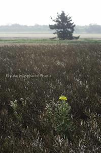 夏の終わり - ekkoの --- four seasons --- 北海道