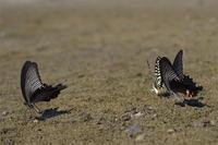 猛暑の里山 - 蝶と蜻蛉の撮影日記
